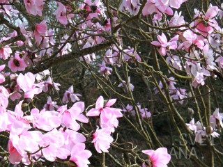 В апреле и мае: Худеем, скоро лето! Антицеллюлит на пике популярности.